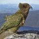 Green parrot crossword clue solution
