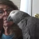 Grey parrot called Griffin humiliates Harvard students by beating them in a memory test
