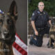 Arizona police K-9 dies of brain tumor complications days after diagnosis
